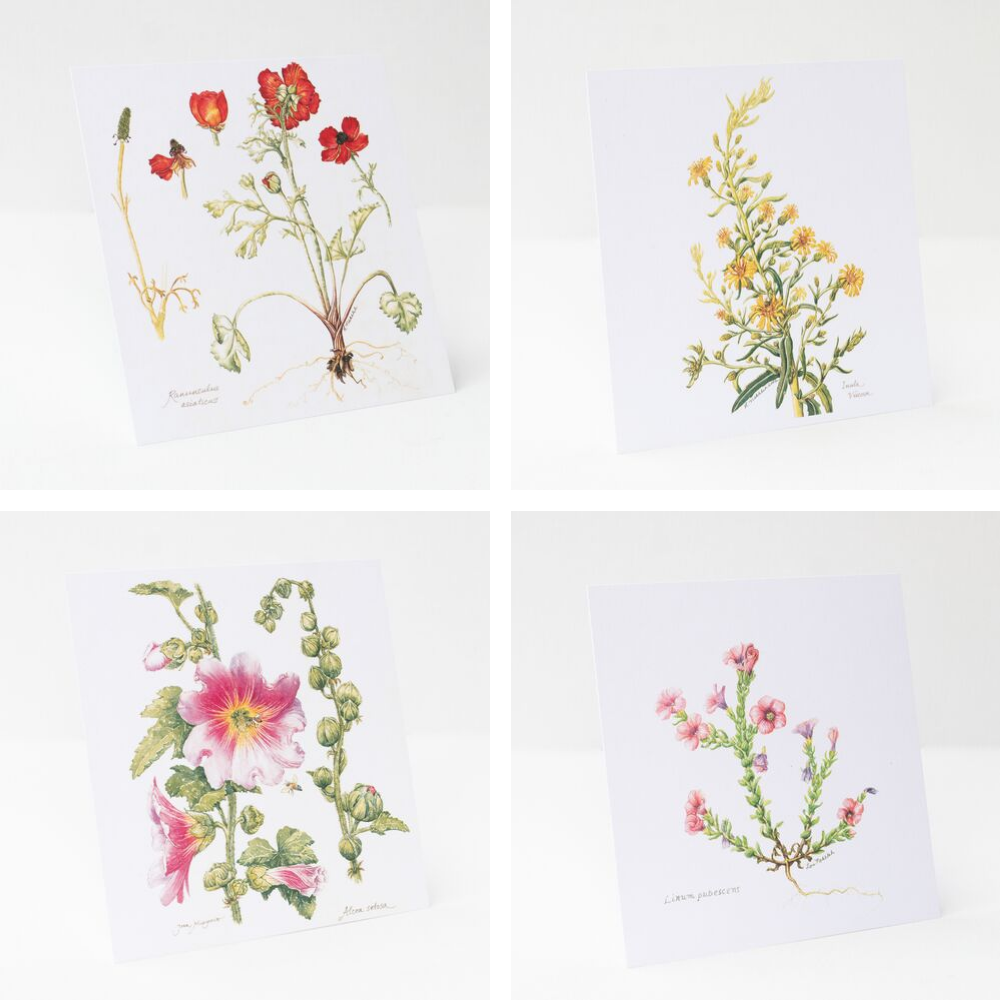 Botanical - Wildflowers Art Prints