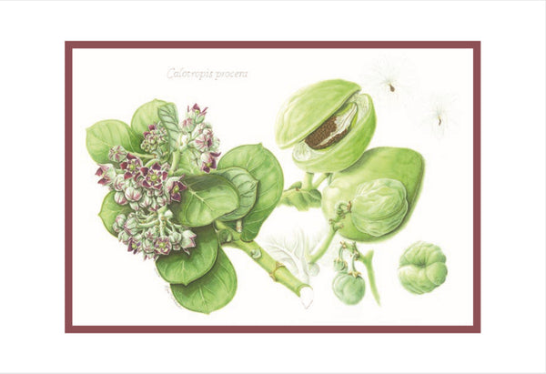 Botanical Art - Botanical Art Postcards