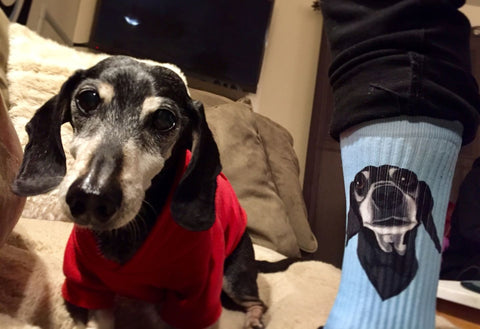 custom pet dog cat socks