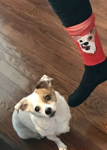 custom cat dog socks