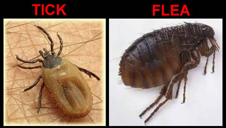 Tick & Flea Control - Dogs