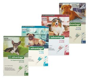 Advantage- A monthly application for the control of fleas and biting lice on dogs and puppies