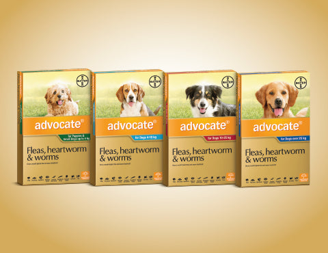 Advocate- Monthly Treatment in dogs and puppy from 7 weeks of age and over 1kg. Treatment of fleas and their larvae, roundworm, hookworm, and ear mites as well as whipworm, biting lice, sarcoptes and demodex. It is also used in the prevention of heartworm.