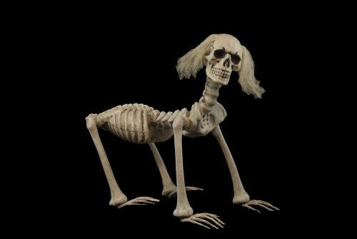 Shadow the Skeleton Dog