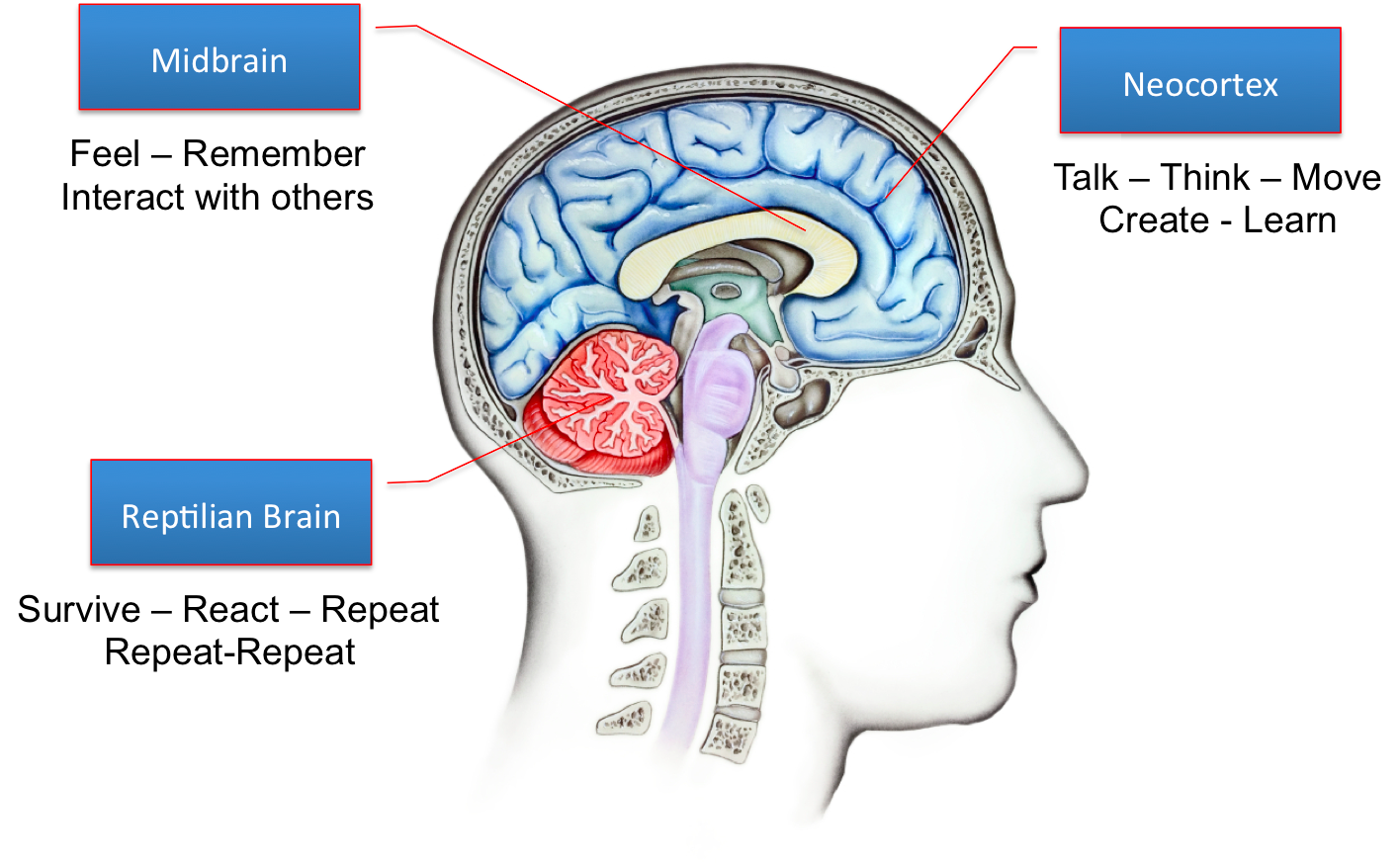 Child's Brain Development - Why Learning Towers (Arc ...