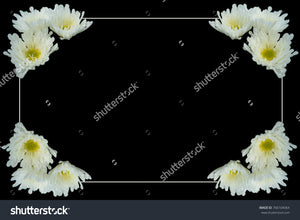 Picture frame bordered by white border and pretty white Chrysanthemums with yellow centers.