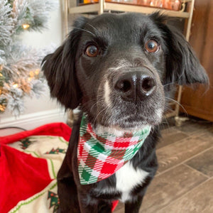 Holiday Plaid Pet Bandana