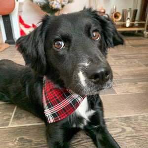 Plaid With Silver Stripe Pet Bandana