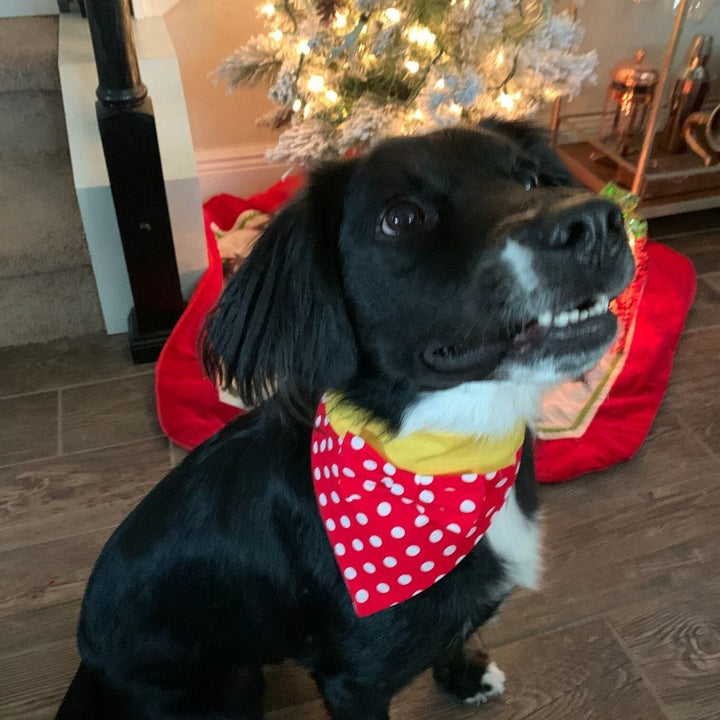 Minnie Pet Bandana