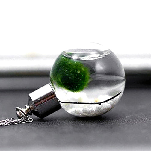 Living Ecosystem Necklace with Marimo Moss
