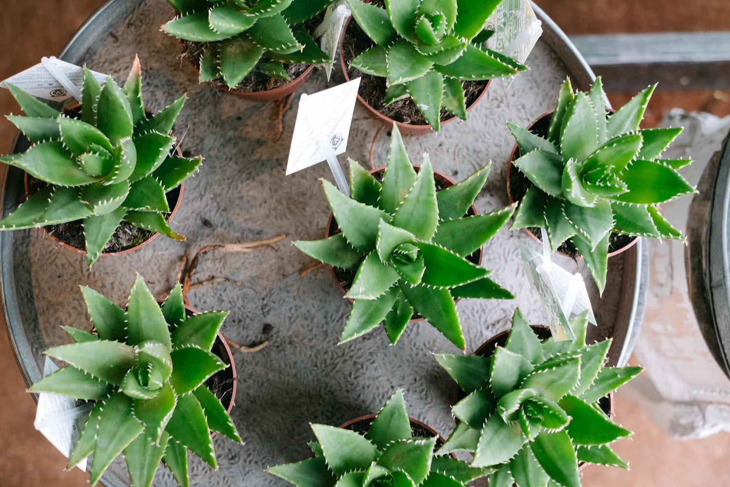 How to Care for Succulents and Cacti