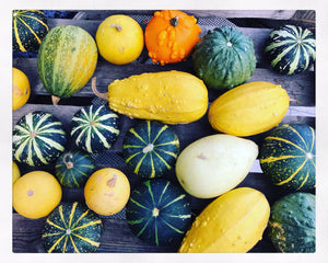 Gourds - Mini Pumpkins