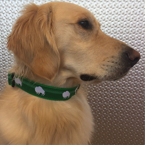 Luck Of The Irish Green Buffalo Dog Collar