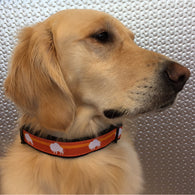 Orange Crush Buffalo Dog Collar
