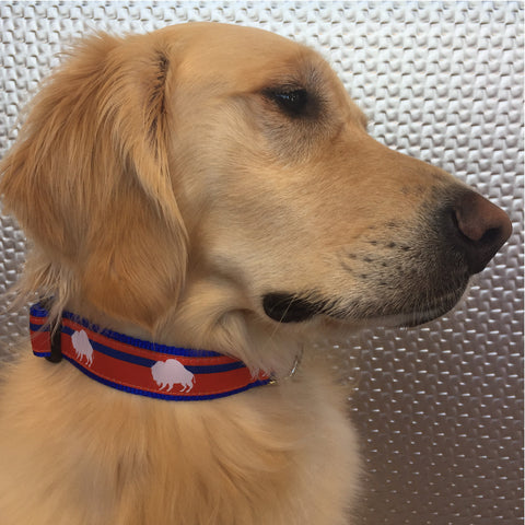 Game Day Red, White, and Blue Buffalo Collar