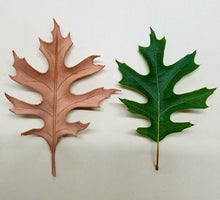 Oak Leaf Workshop with Jim Linnell