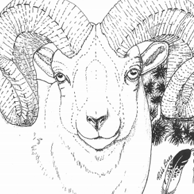 The Big Horn Sheep Pattern by Robb Barr