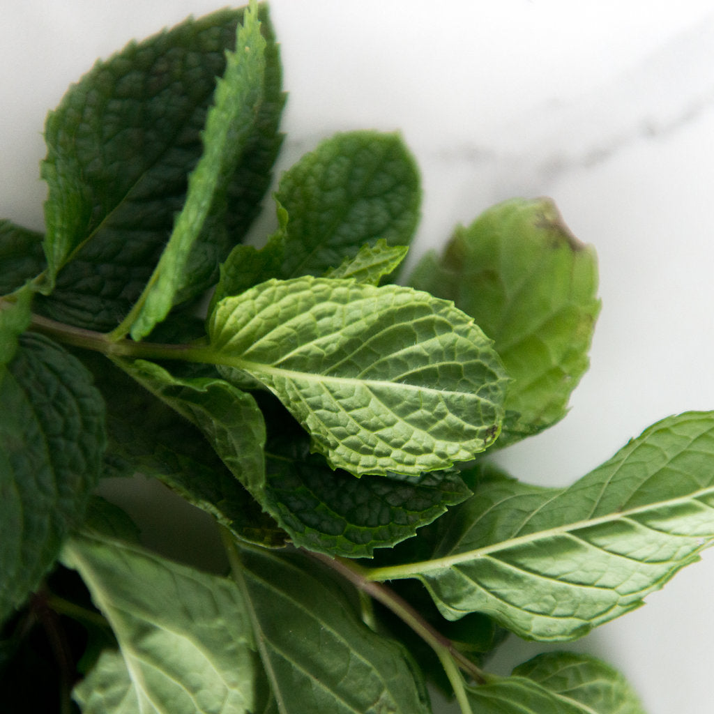 ingredient spotlight: mint