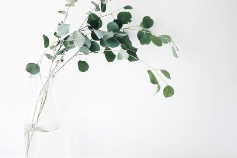 Eucalyptus branches in a jar of water