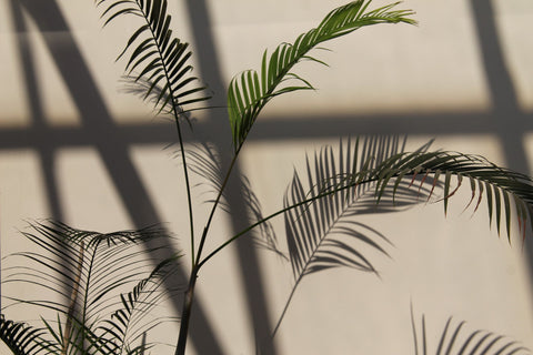 Plants with shadow