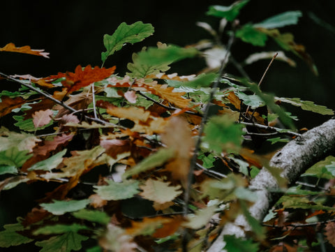 Leaves and bark on the forest floor
