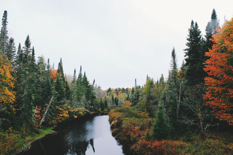 Forest of tree changing color along a river