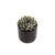 9cm Mini Succulents - Dot Pattern (Set of 2)