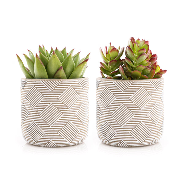 9cm Mini Succulents - Weave Pattern (Set of 2)