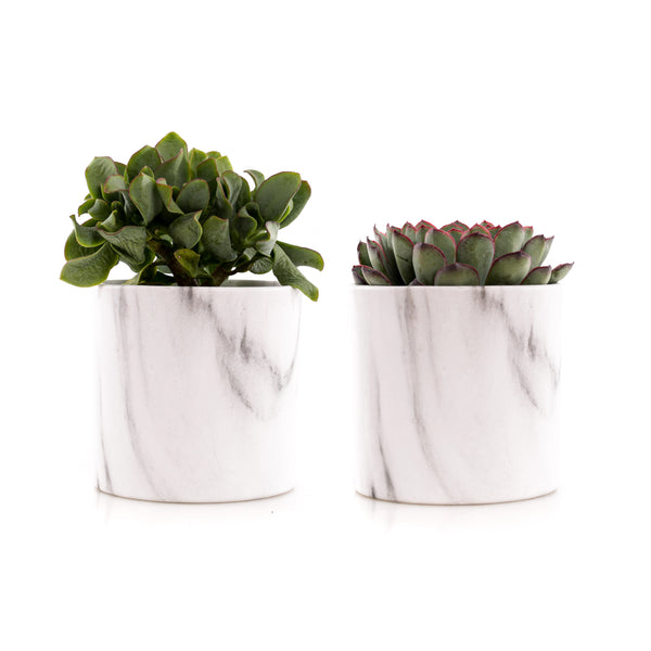 9cm Mini Succulent - Marble Pattern (Set of 2)