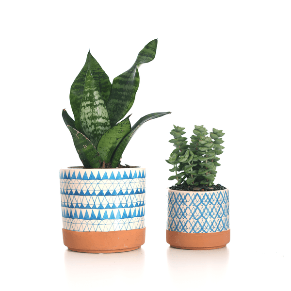 Houseplant and Succulent Set