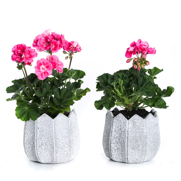 Grey Cement Pot Plant Set