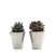"2.5"" Mini Succulent - Modern Ceramic (Pack of 2)"