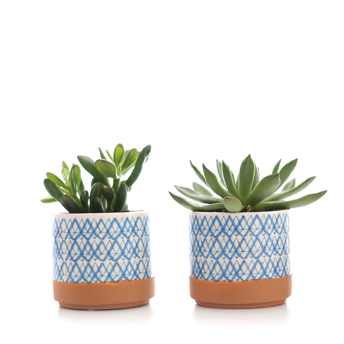Mini Succulent in Blue Patterned Ceramic (Pack of 2)