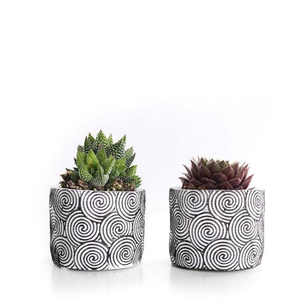 "2.5"" Mini Succulent - White Patterned Ceramic (Pack of 2)"