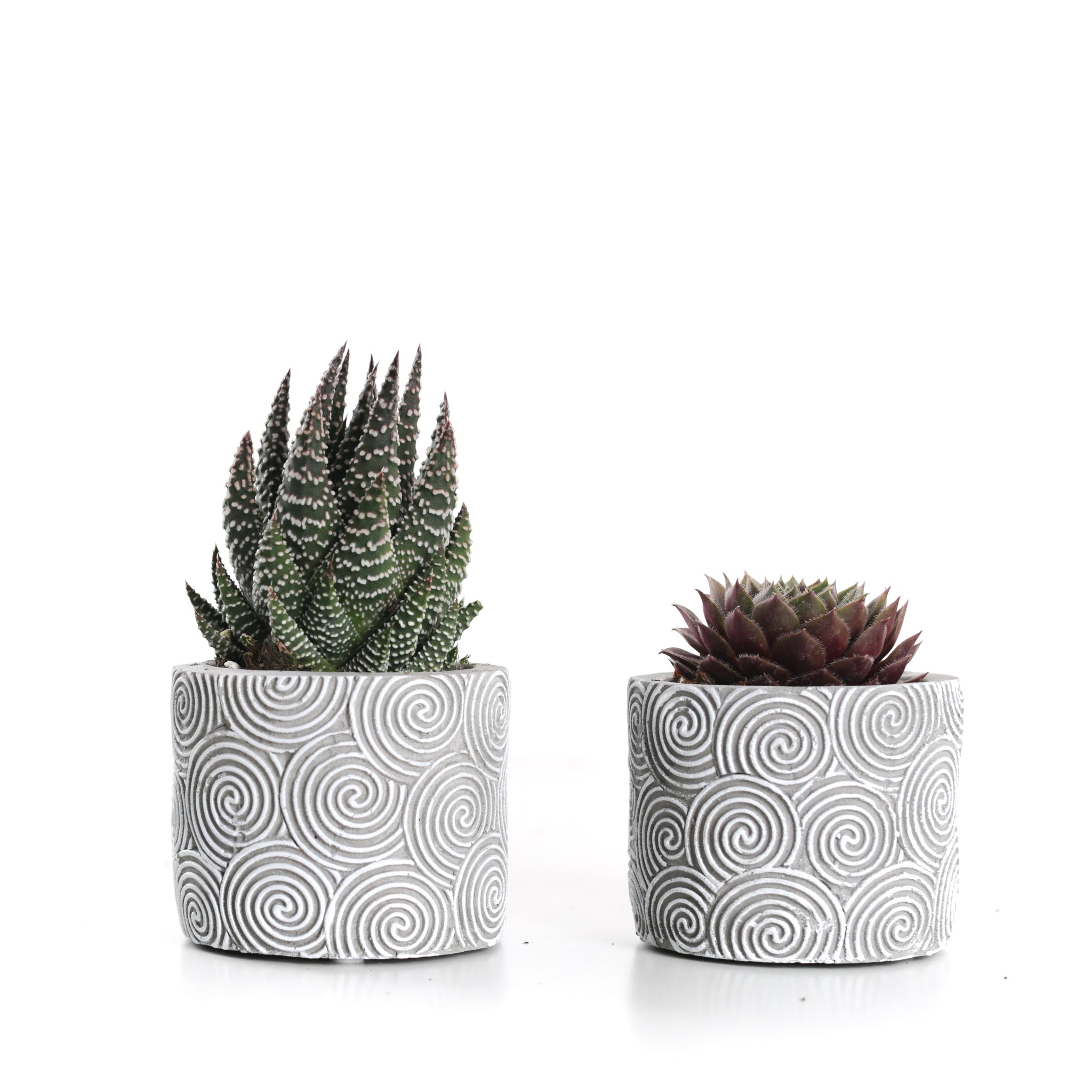 Mini Succulent in Grey Patterned Ceramic (Pack of 2)