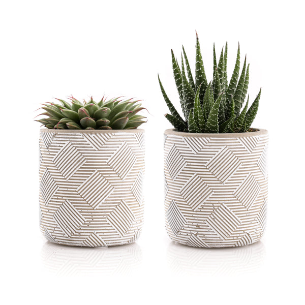 "2.5"" Mini Succulents - Weave Pattern (Set of 2)"