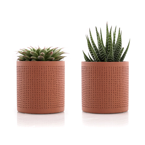"2.5"" Mini Succulents - Dot Pattern (Set of 2)"