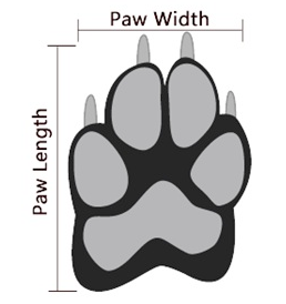 Paw size - Contact Us