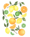 Summer Citrus Tree Branch Watercolor Print
