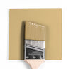 Benjamin Moore Colour CC-300 Sombrero wet, dry colour sample.