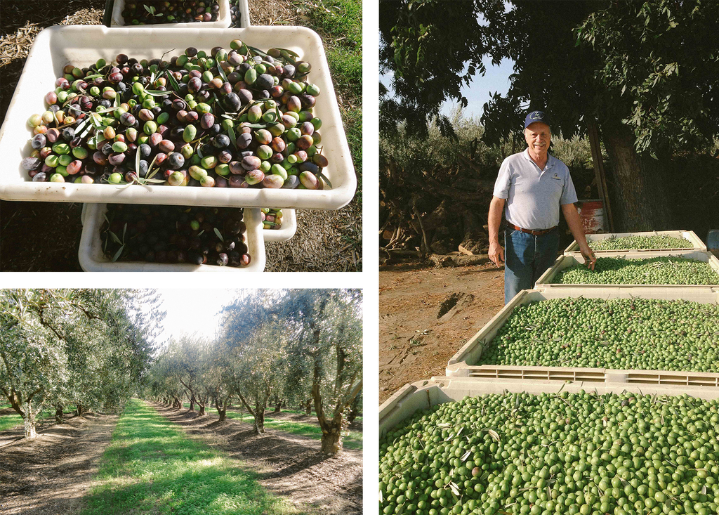Quality West Coast Olive Oil