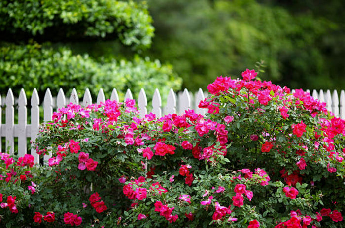 Flowering Shrubs | How to Prune