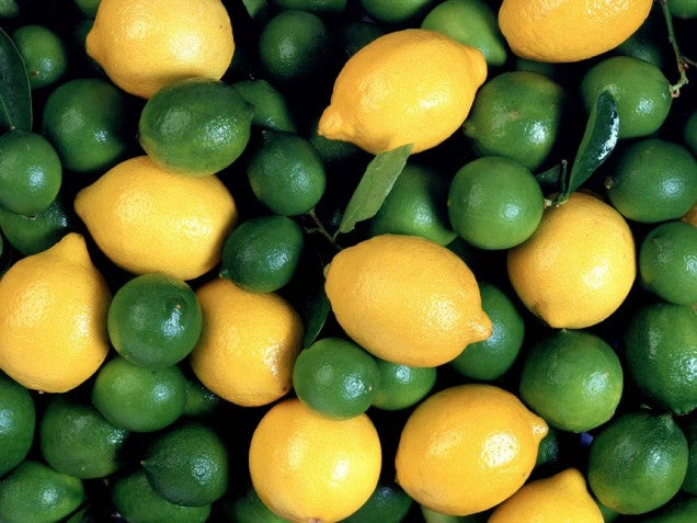 Growing Meyer Lemons and Key Limes in Containers