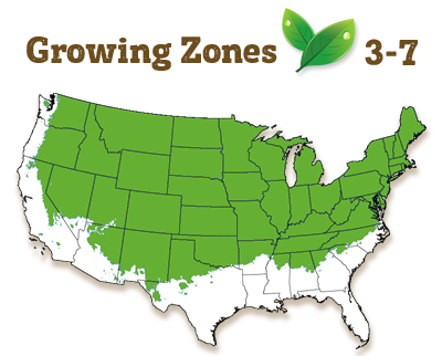 growing zone 3-7
