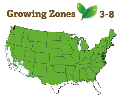 growing zone 3-8
