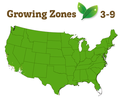 growing zone 3-9