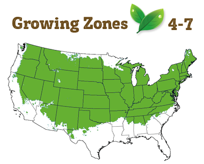growing zone 4-7