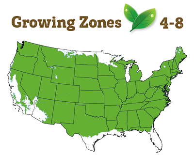 growing zone 4-8