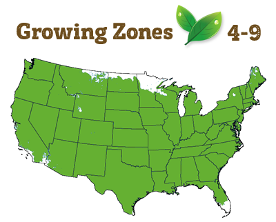 growing zone 4-9