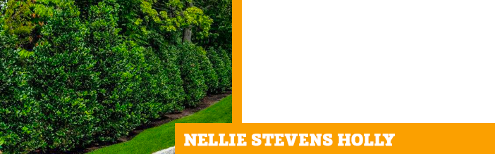 nellie-stevens-holly